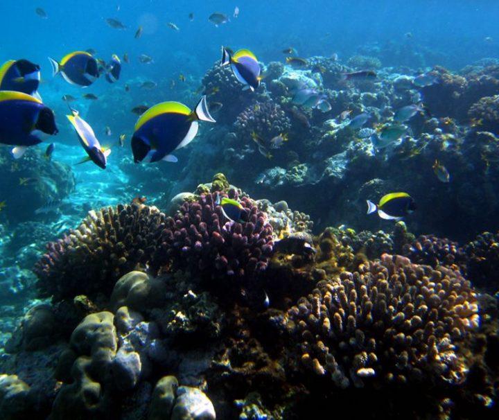 Kiunga Marine Reserve